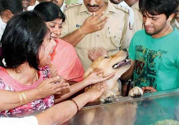 dead ias officer dog2
